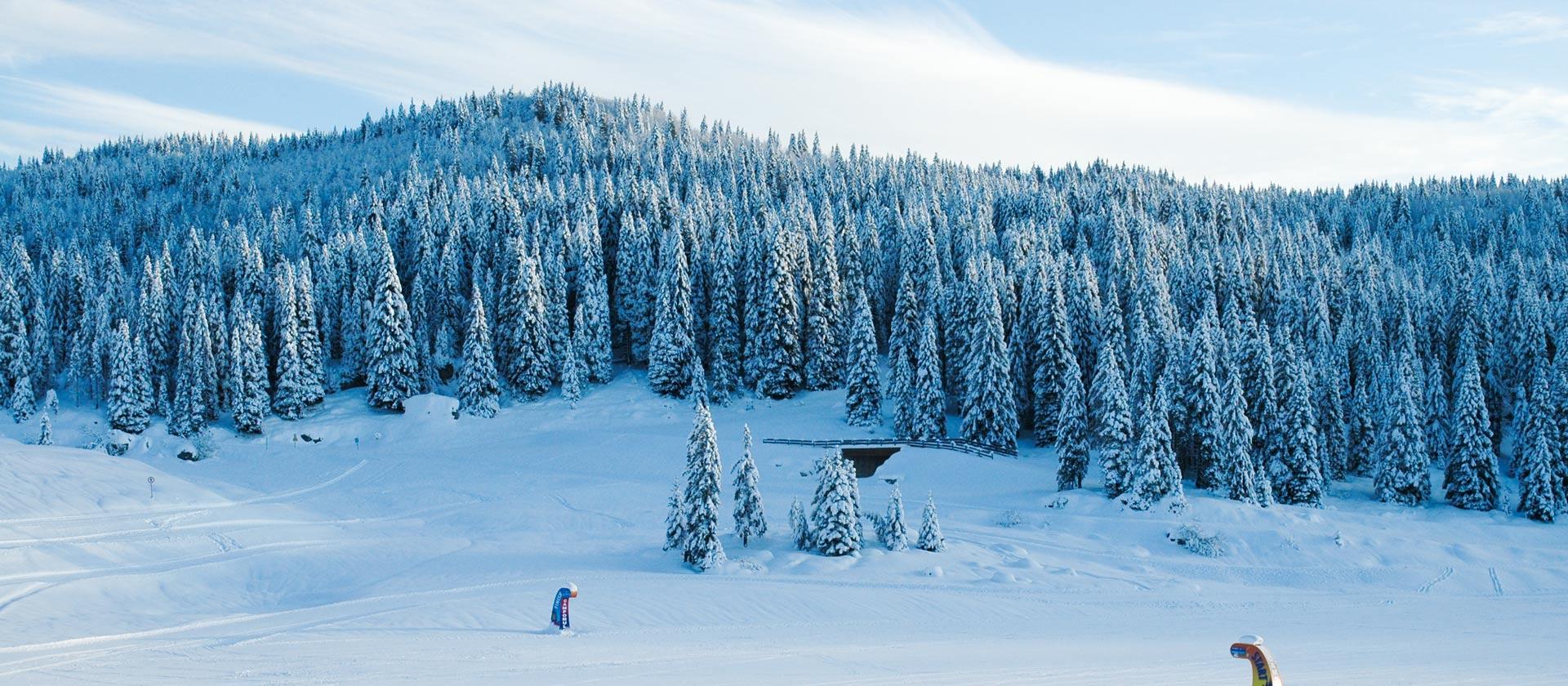 centro fondo gallio inverno