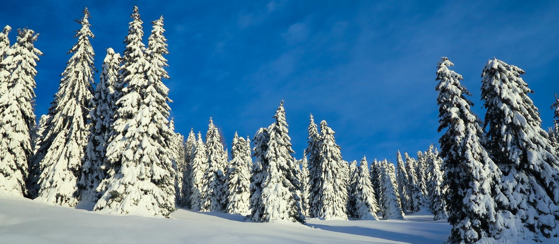 neve a campomulo